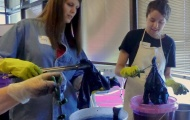 Students dip and re-dip their cloth in indigo - at a previous NCMA workshop.